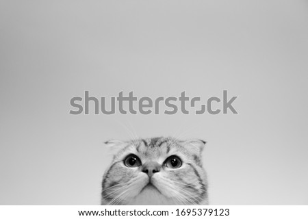 Banner with cat. background with animal for text insertion, advertising. Monochrome Picture.