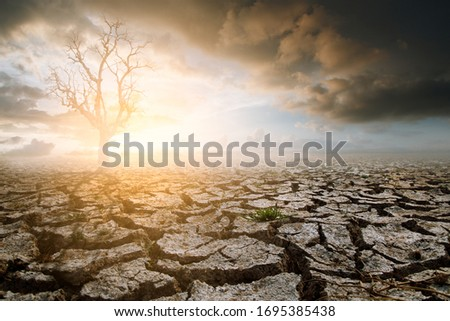Lonely dead tree under dramatic evening sunset sky with cloudy drought cracked landscape. Global warming concept. #1695385438