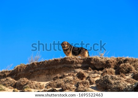 An old guard dog standing on the edge of a brown cliff on a clear sunny day #1695522463