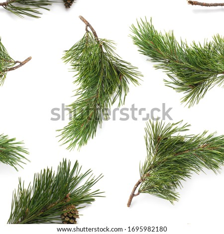 Pine branches isolated on white background, seamless pattern. Christmas and New Year background. Royalty-Free Stock Photo #1695982180