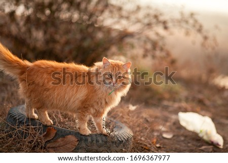 The cat walks on the street and hunts #1696367977