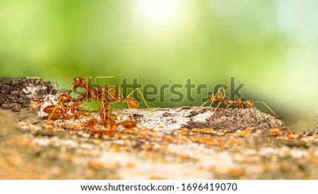 Fire ant on branch in nature