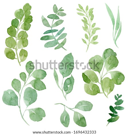 Hand drawn watercolor illustration of abstract green branch. Elements for design of invitations, movie posters, fabrics and other objects, isolated on white background