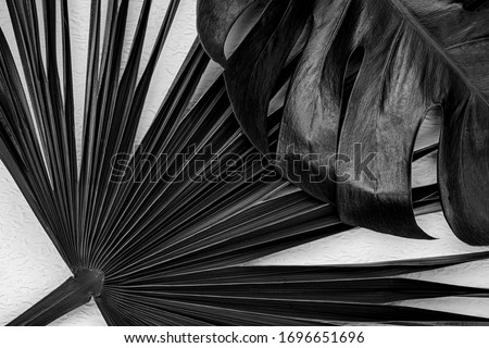 Natural palm leaves on white background. Dark botanical art background with monstera leaf.  Black colored plants. Natural leaf of monstera palm. Royalty-Free Stock Photo #1696651696