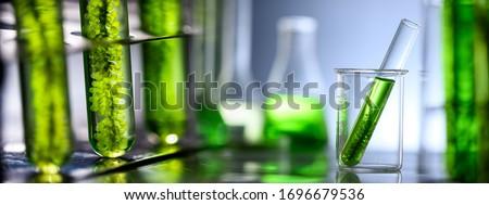 Photobioreactor in laboratory of algae fuel, biofuel industry project, Algae research in industrial laboratories for medicine Royalty-Free Stock Photo #1696679536