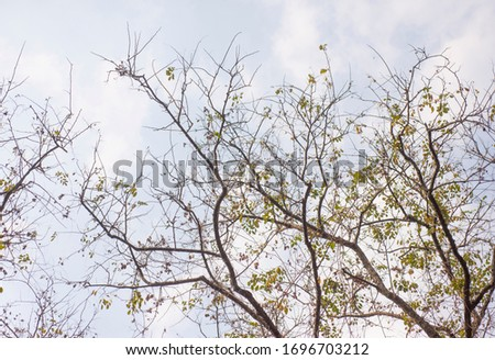 Trees in the season without leaves on a white background. #1696703212