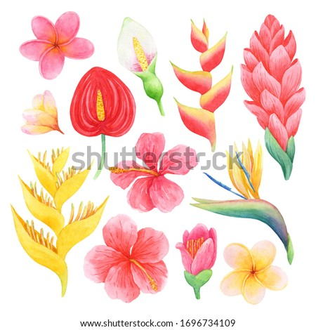 Watercolor set of beautiful tropical flowers. Hand-drawn illustration isolated on white background. Bright exotic clip art perfect for cosmetics design, card making and wedding decor.