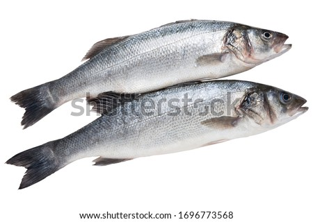 two silverfish seabass, on a white background, raw fresh fish, isolate