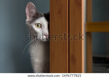 Shy cat looking at the window
