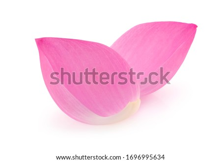Pink lotus petals isolated on white background. #1696995634