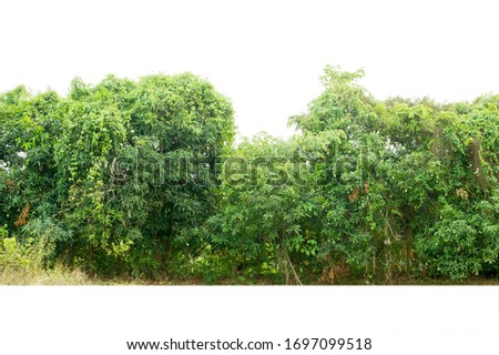 View of a High definition Treeline isolated on a white background #1697099518