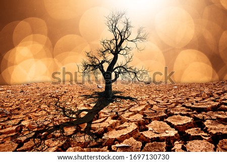 Dry cracked land with dead tree and bokeh in background a concept of global warming #1697130730