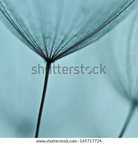 abstract dandelion flower background, extreme closeup with soft focus, beautiful nature details. Art photography  #169717724