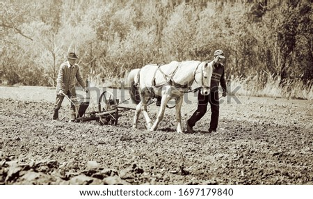Horse-drawn seed drill at work. Farmers with horse-drawn drill working the field. Vintage picture.