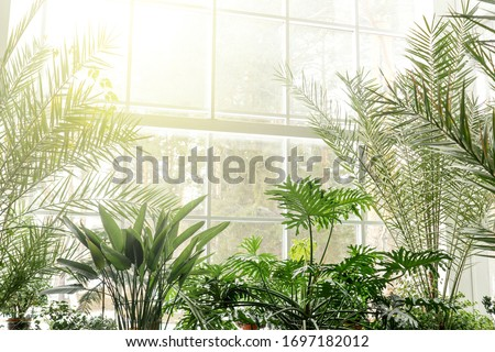 Green plants in botanical garden indoor. Sunshine in panoramic window. Fresh natural background. Royalty-Free Stock Photo #1697182012