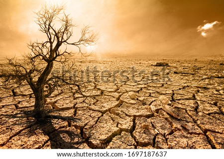 Global warming, arid, dehydrated, dead trees Royalty-Free Stock Photo #1697187637