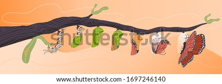 Flat style vector cartoon  illustration of butterfly life cycle. Stage of evolution Eggs,caterpillar larva, pupa. Beautiful wing insect transformation on branch.