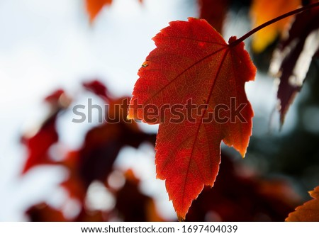bright autumn leaves on the branches #1697404039