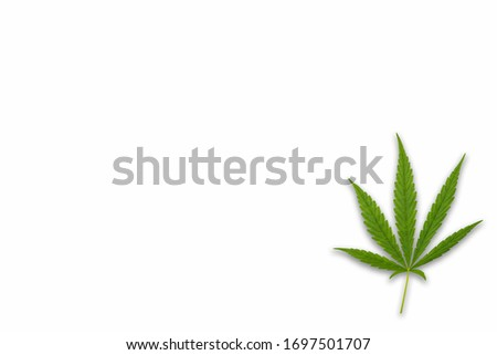 Cannabis leaves. Background with marijuana isolated on white background. Copy space. green cannabis leaf drug marijuana herb Background.
