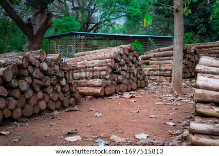 Wood storage in the forest #1697515813
