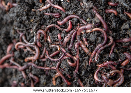 a group of red worms lies on the ground