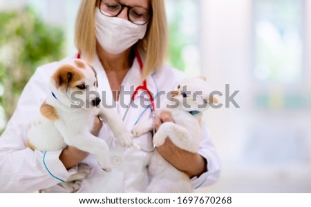 Vet examining dog and cat. Puppy and kitten at veterinarian doctor. Animal clinic. Pet check up and vaccination. Health care for dogs and cats. Royalty-Free Stock Photo #1697670268