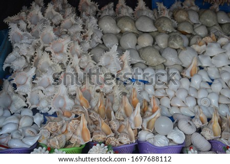 Different types of Beautiful sea shells are staked in Kanyakumari beach for sale. #1697688112