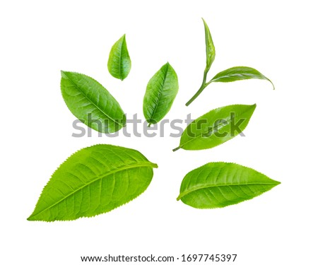 swt fresh green tea leaf isolated on white background Royalty-Free Stock Photo #1697745397