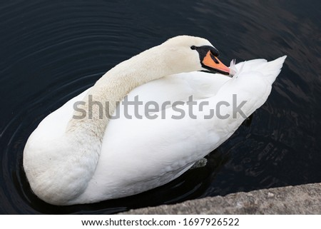 Swan at a sea in Berlin Royalty-Free Stock Photo #1697926522