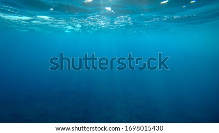Underwater photo of atlantic ocean near the Canary Islands