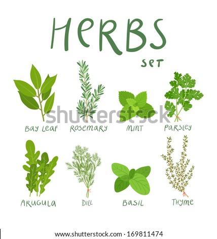 Set of 8 vector herbs Royalty-Free Stock Photo #169811474