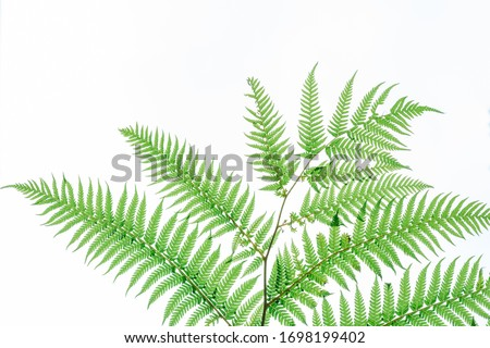 green leaves of fern isolated on white background #1698199402
