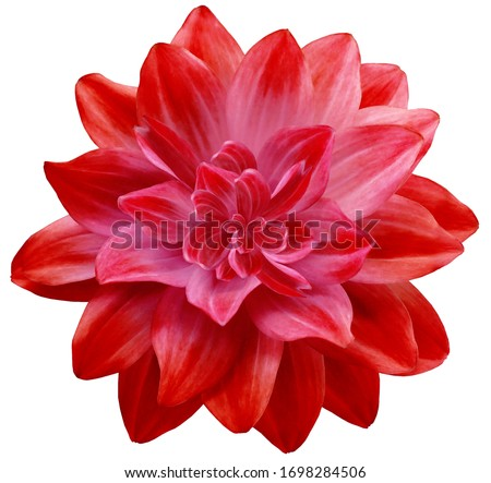 dahlia flower red. Flower isolated on a white background. No shadows with clipping path. Close-up. Nature. #1698284506