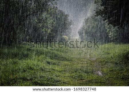 Heavy rain in the Botanical Garden Royalty-Free Stock Photo #1698327748