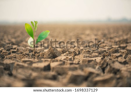 People planting the seedlings into the arid soil.   Seedlings are growing from arid soil .concept of global warming. Royalty-Free Stock Photo #1698337129