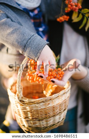 Autumn composition, acorns and oak leaves, yellow berries in a wicker basket. children hands
