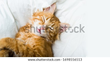 funny ginger cat lying in the bed on white bed clothes #1698556513