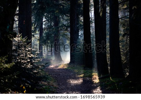 Landscape of alley in autumnal forest with tall trees #1698565939
