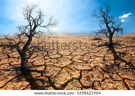 Global warming, arid, dry soil, cracked rift, dead trees Royalty-Free Stock Photo #1698621964