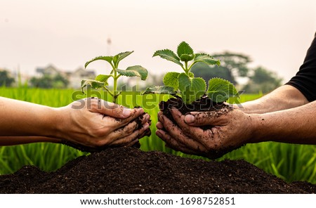 Conservation of world resources, Hand of a man holding a tree to prepare for planting in the ground, Planting trees is adding oxygen to the air, Save world save life concept.   Royalty-Free Stock Photo #1698752851