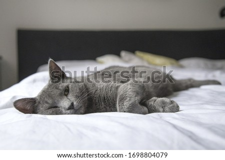 Cat resting on bed while posing for camera