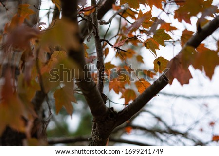 beautiful warm colors autumn tree background close up #1699241749