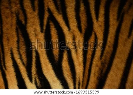 Solid color tiger skin photos