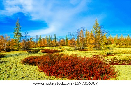 Autumn wilderness steppe nature view. Colorful steppe nature landscape. Autumn nature scene. Autumn steppe landscape #1699356907