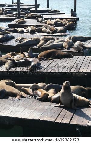 U.S., San Francisco, Pier 39 Seals vertical picture