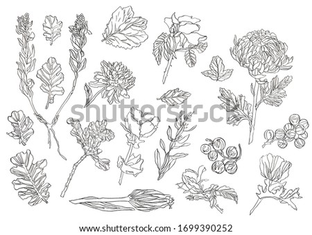 Decoorative ink set of Wild forest leaves, plant, poppy and chryzantemum on white background #1699390252