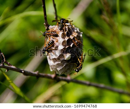 wet picture of a bee and a hive in the green grass