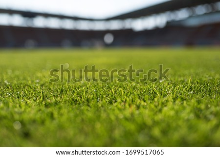 Grass at football stadium during sunny day Royalty-Free Stock Photo #1699517065