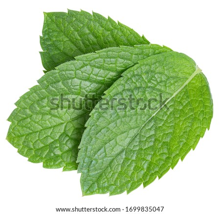 Mint leaves isolated on white. Three spearmint leaves clipping path. Mint macro studio photo #1699835047