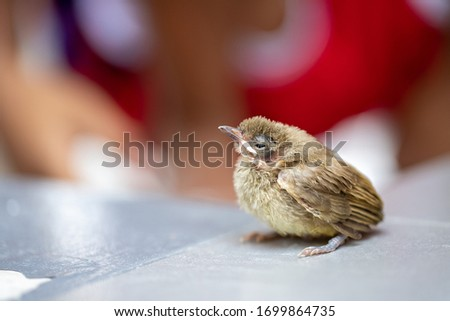 A picture of a young bird perching on the tile floor,Eurasian Tree Sparrow
